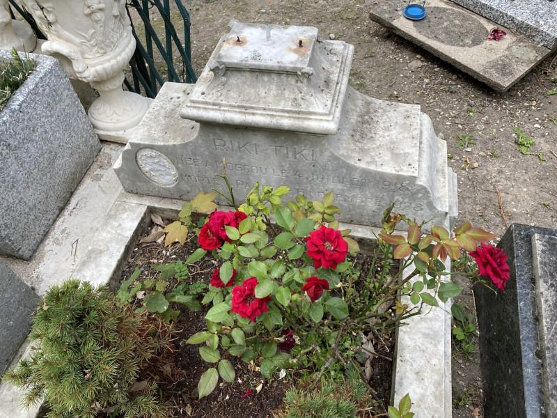 6. Рики-Тики. Родившаяся 4 июля 1918 года в Москве — умершая в Париже 6 ноября 1928 года