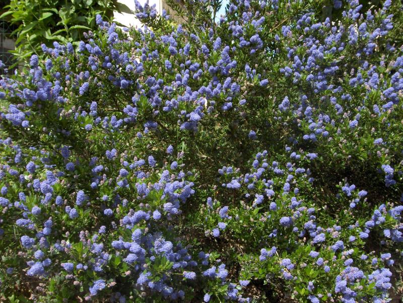 5. Анжелика собирала разные корни и цветы