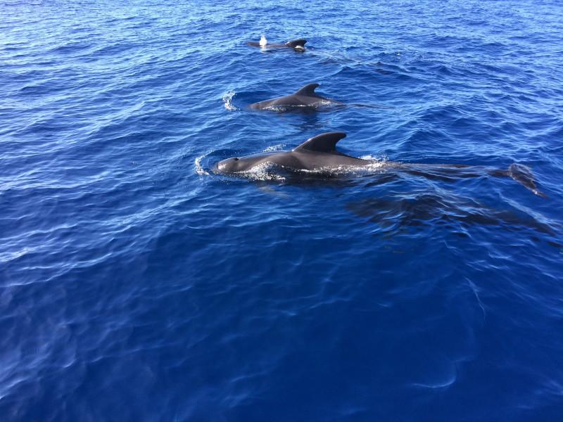 24. Дельфины