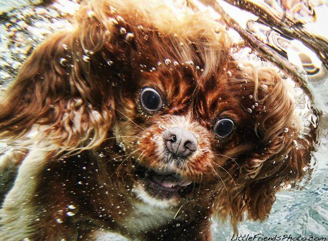 dog under water1