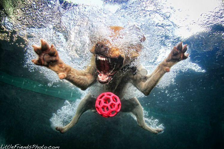 dog under water2