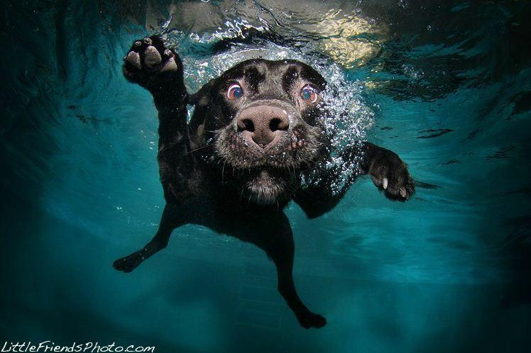 dog under water3