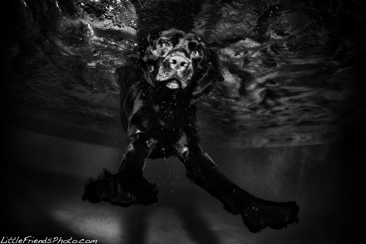 dog under water6