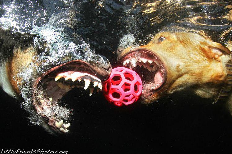 dog under water5