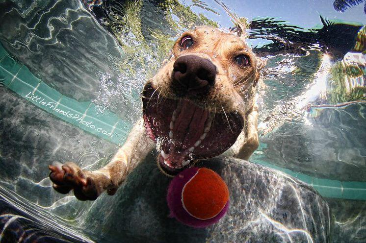dog under water7