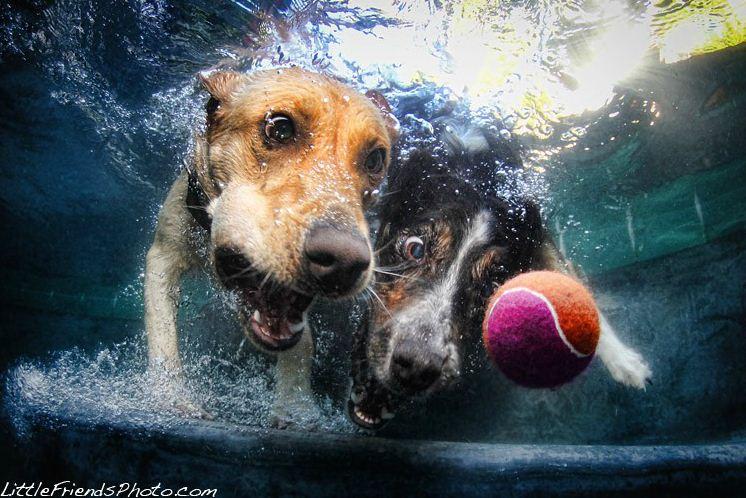 dog under water8