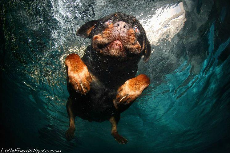 dog under water15