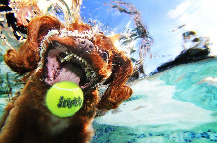 dog under water12