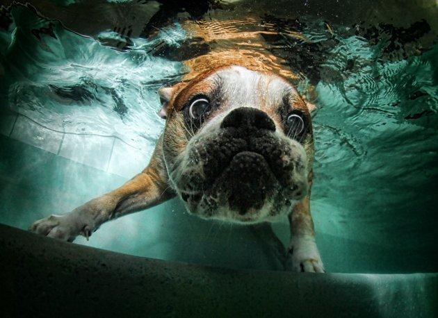 dog under water13