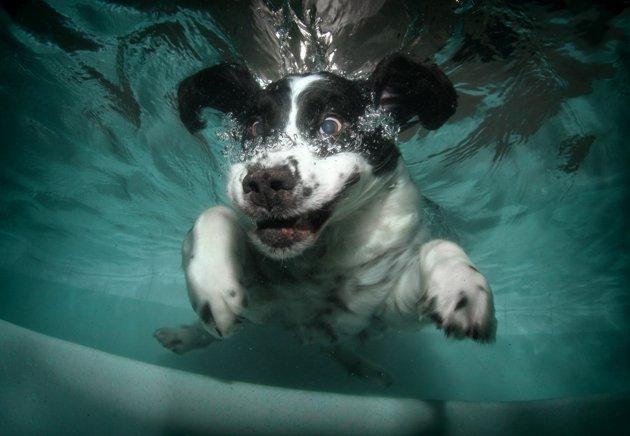 dog under water16