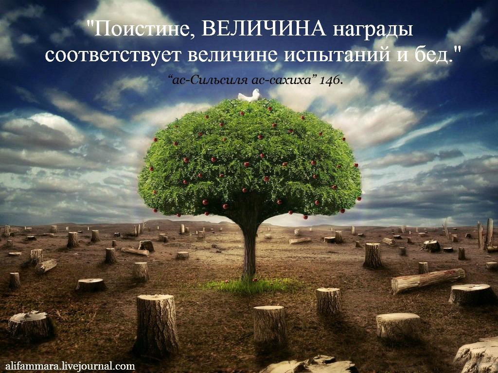 yalniz_agac