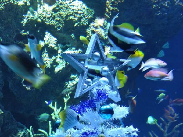 новый год в океанариуме