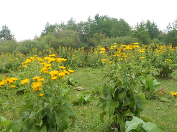 новое фото сад 2 068