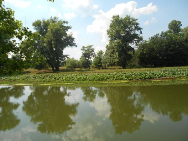 новое фото сад 2 298