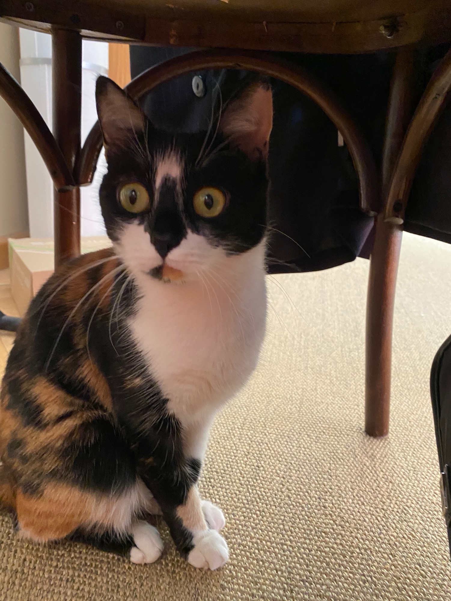На самом деле Муся нормальная кошка с одной (1) башкой