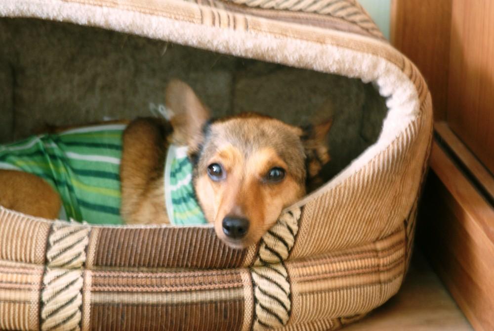 О ветклиниках и стерилизации собак