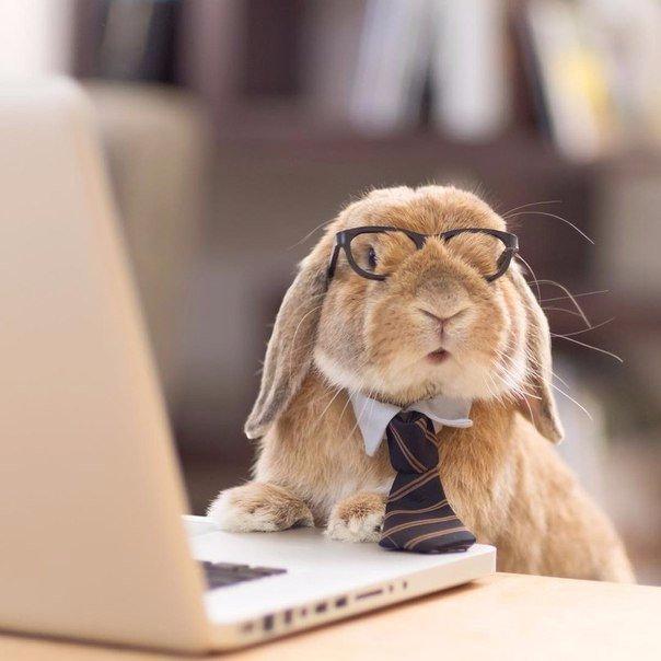 Подарить волшебные, прикольные картинки животных про работу