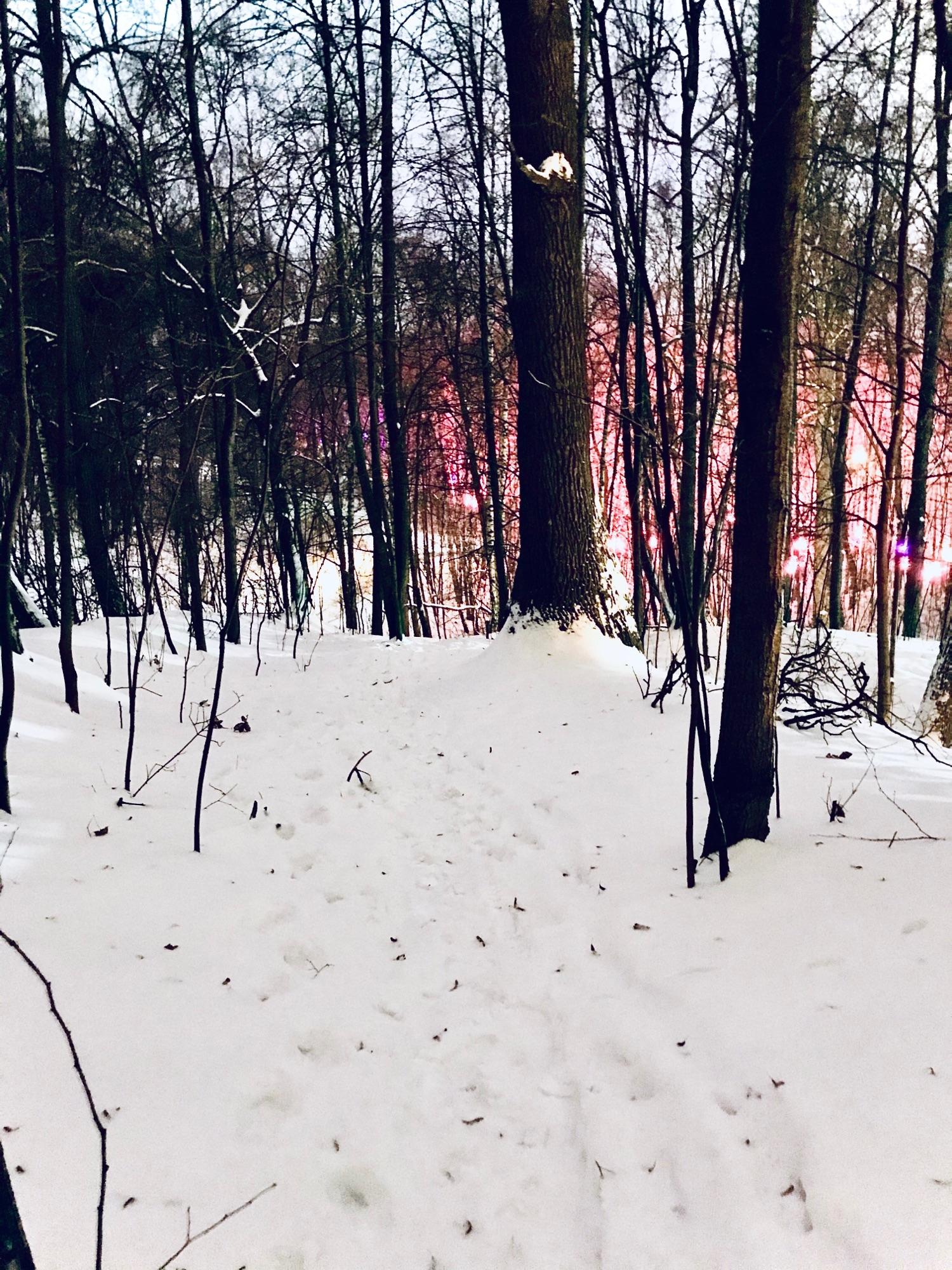 Я пробиралась через лес, постепенно все выше и выше... на Воробьёвы горы