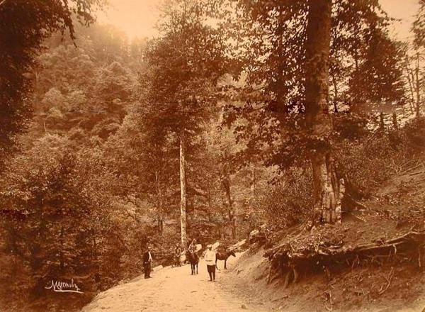 Вид горной дороги, идущей по Зекарскому перевалу через хребет Аджаро-Ахалцихских гор2