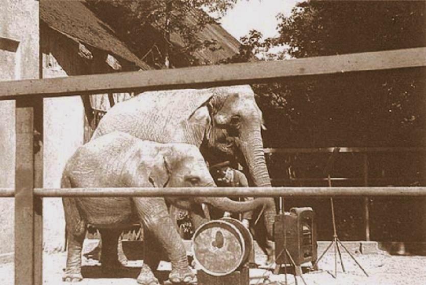 Выступление оркестра слонов
