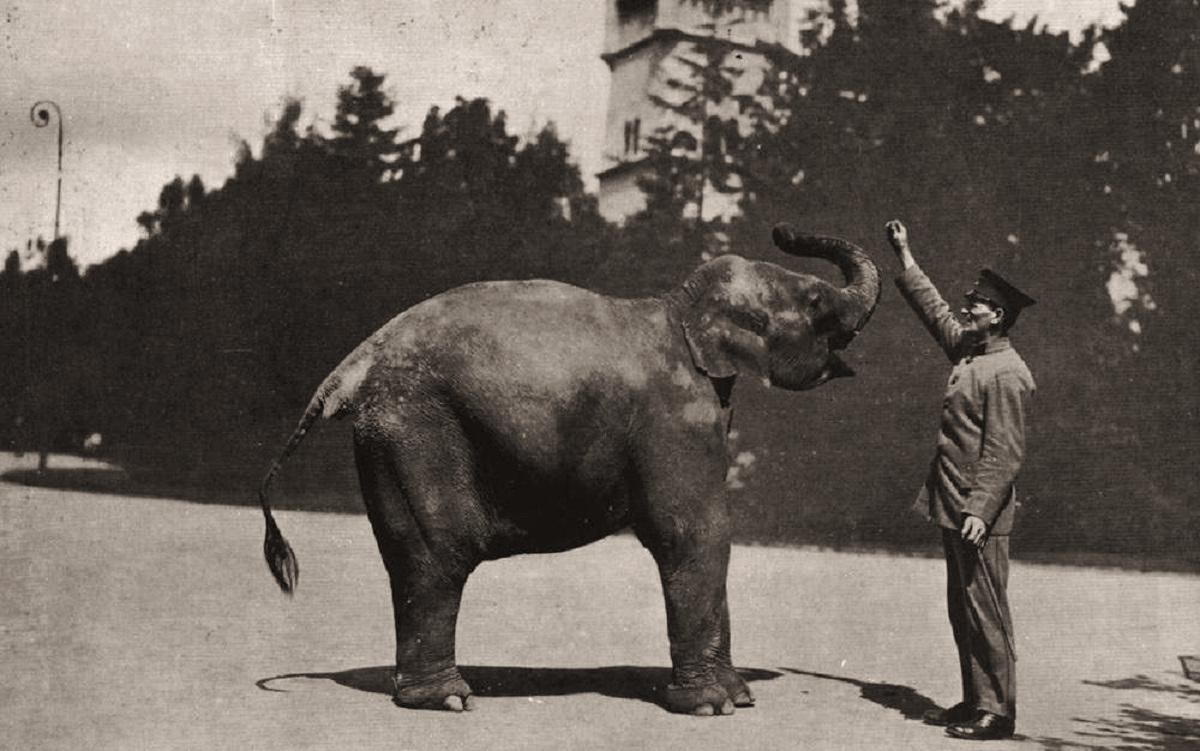 Работник Зоопарка со слоненком