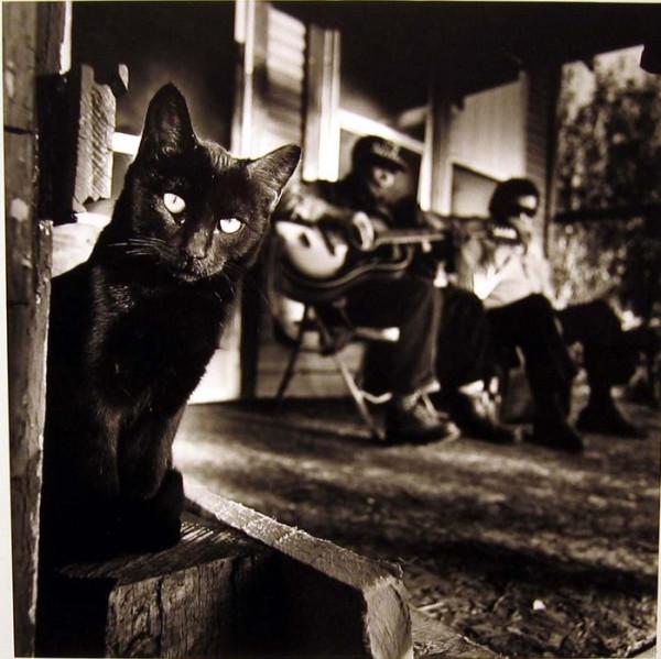 41221800_Black_Cat22