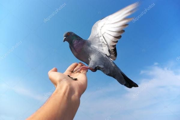 Если приснилась голубка в компании птенцов, то в доме наступит долгожданный мир и покой.