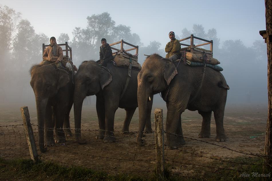 3-slona