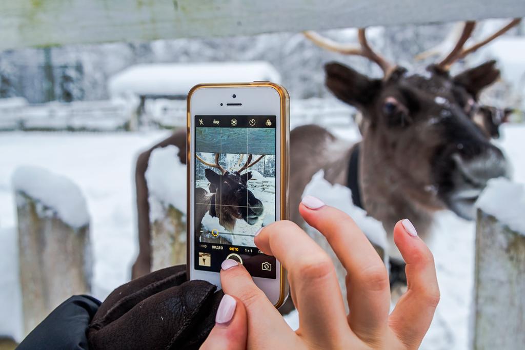 фотографируем северного оленя в instagram
