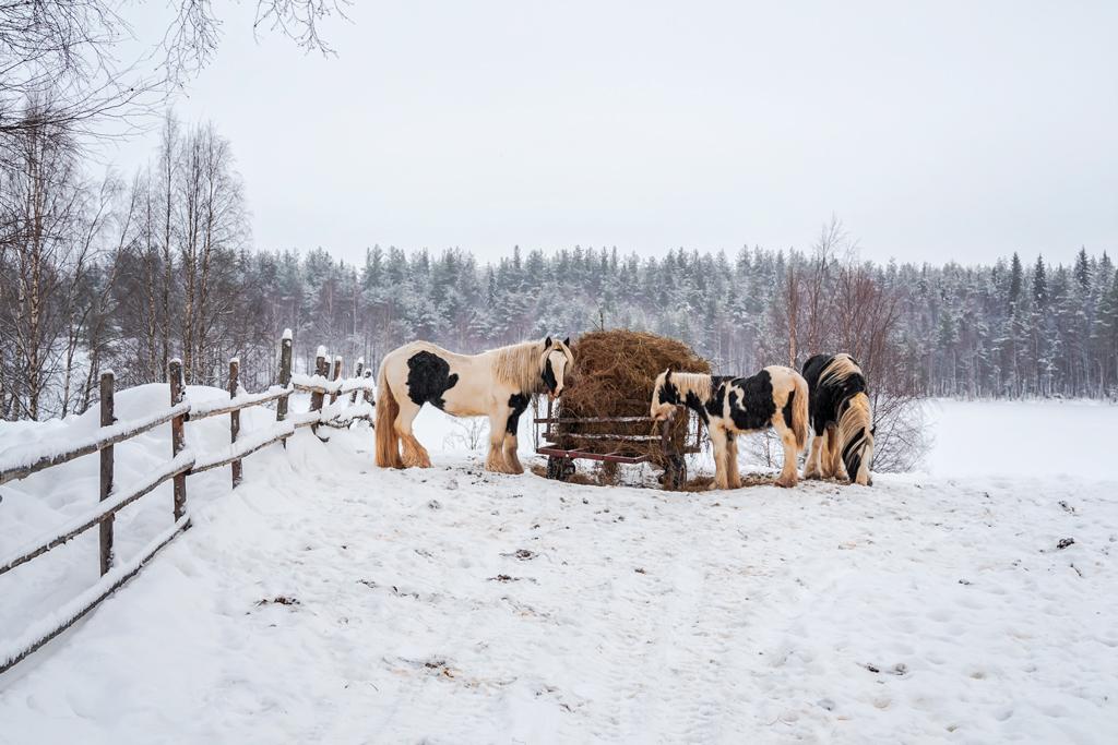 Лошади и кони очень интересной окраски, похожи на коров