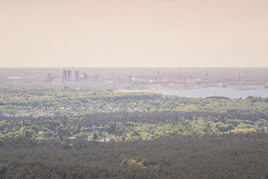 Вид с Tallinna Teletorn таллинской телебашни на Таллин
