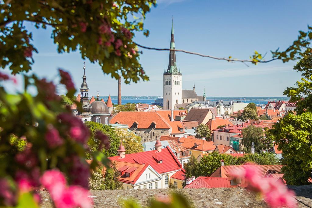 Цветущий Таллин и вид со смотровой площадки