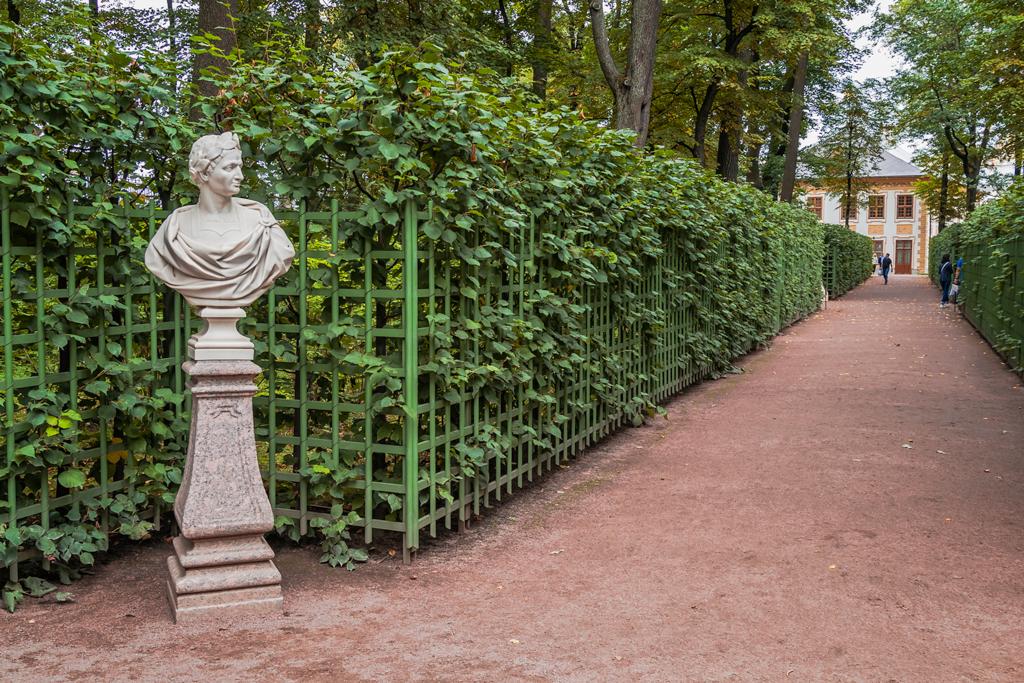 Аллея летнего сада в Петербурге