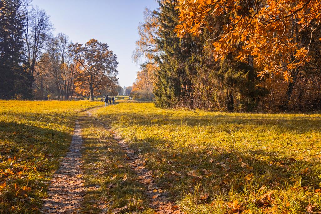 Осень в Павловском парке