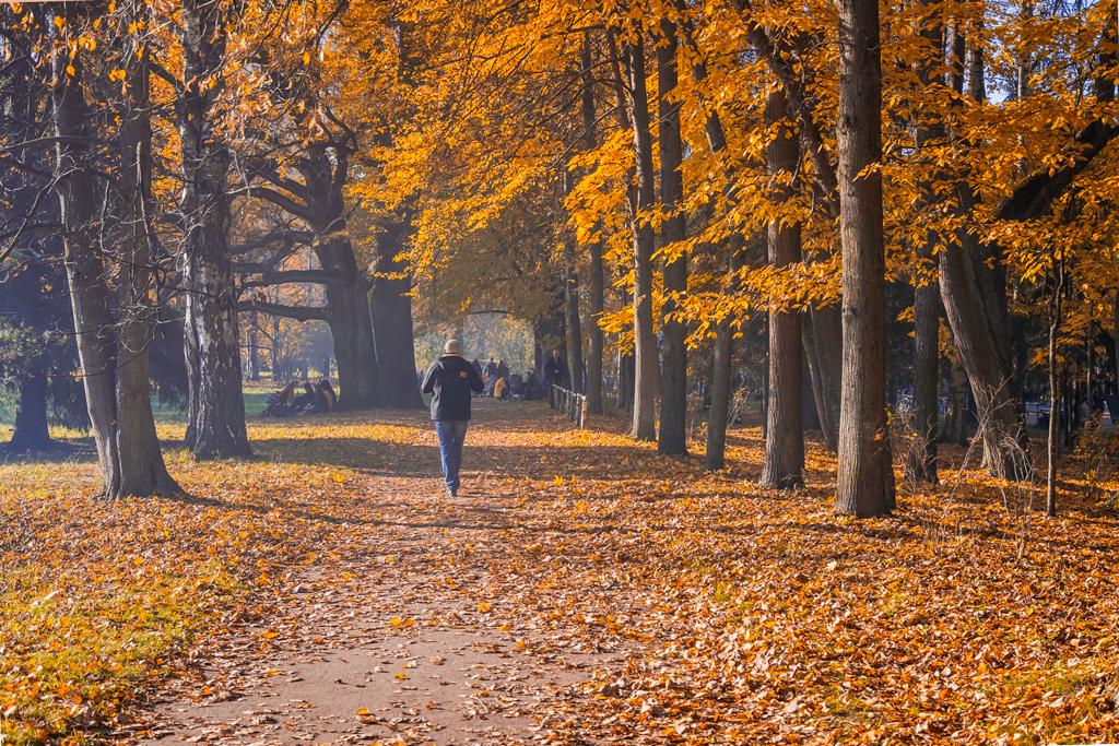 Осенние фотографии Павловска