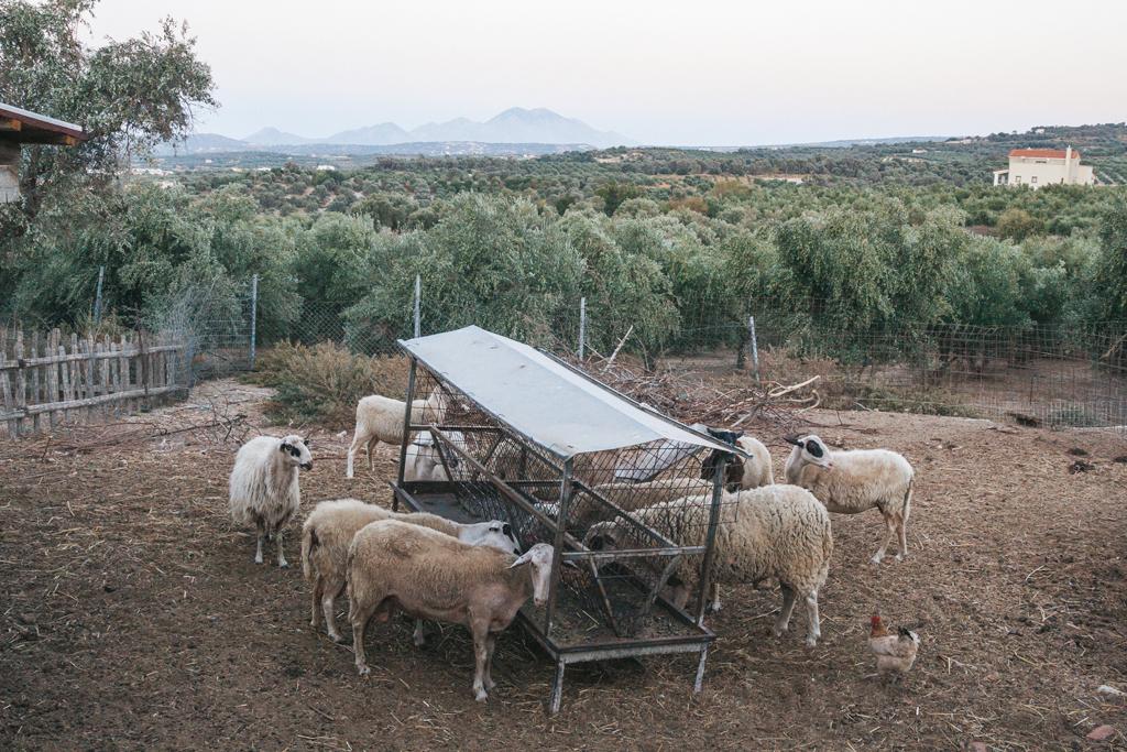 Это эко-пчёлы и они делают экологический мёд ферме, процесс, который, только, здесь, оливкового, активно, Греции, масла, радостно, можно, производства, аппарат, заводах, винных, поэтому, сетях, главный, социальных, бывают