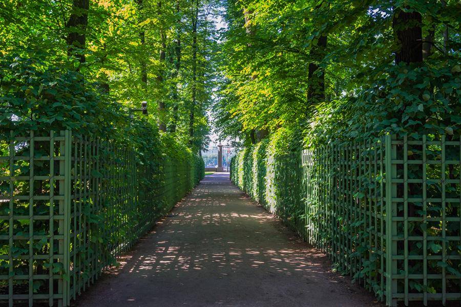 Зеленый уголок усатой аристократичности