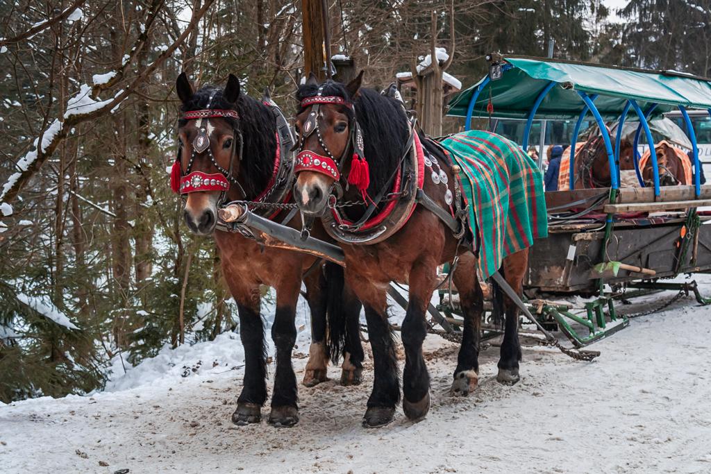 Катания на лошадях в санях в Висле-Малинке, Польша