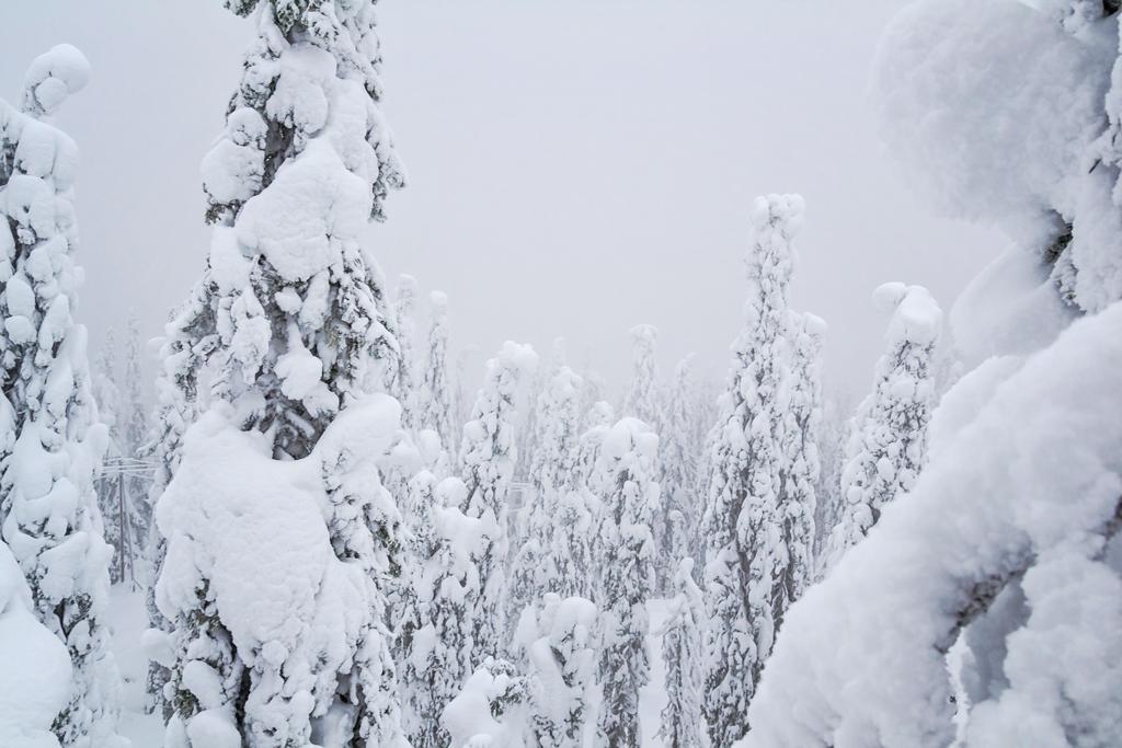 Вид со смотровой площадки Коли в Финляндии, зимой