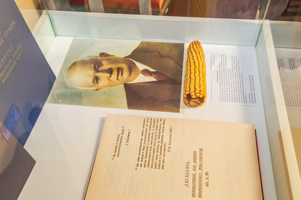 кукуруза выращенная в Силламяэ