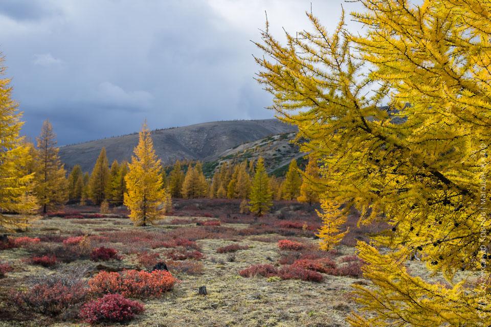 Осень в Магадане. Магаданская область, Хасынский район, р Хета, фото: Александр Крылов, Магадан 2013