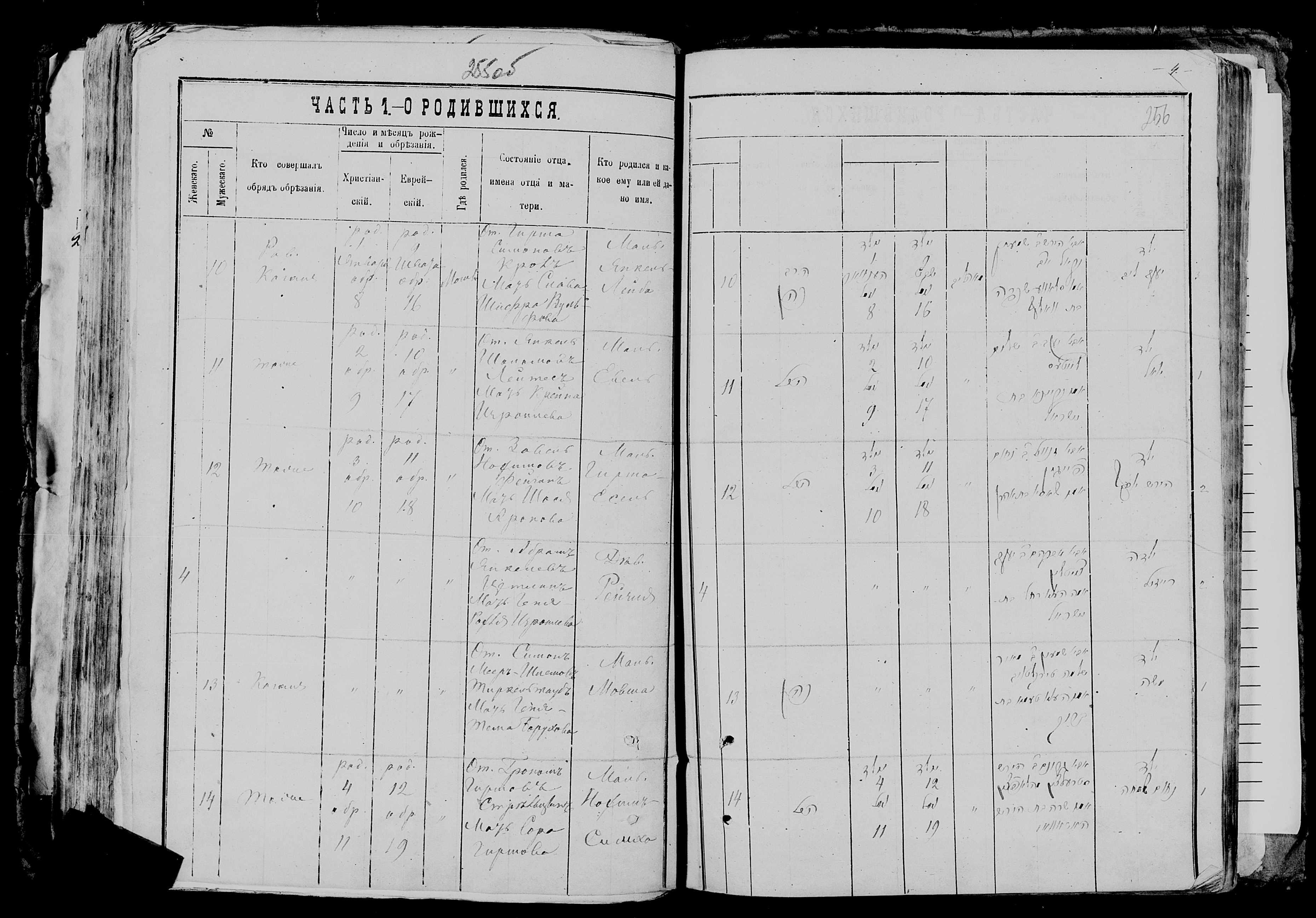 Нохим-Симха Грономович Стрельцын 4 января 1878, запись 14, пленка 007766481, снимок 784