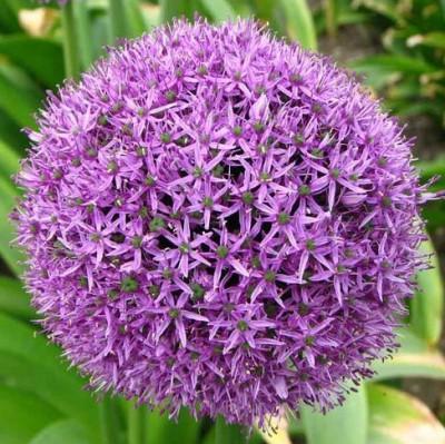цветок для Иришки