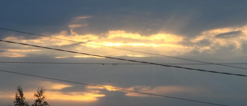 провода и птицы2
