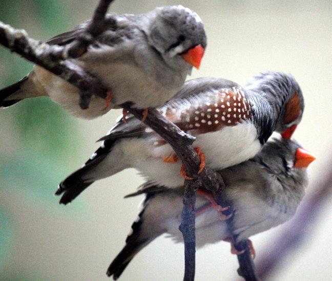 птичкиВэб