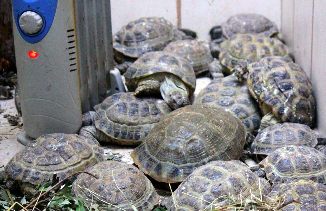 черепахи1Вэб