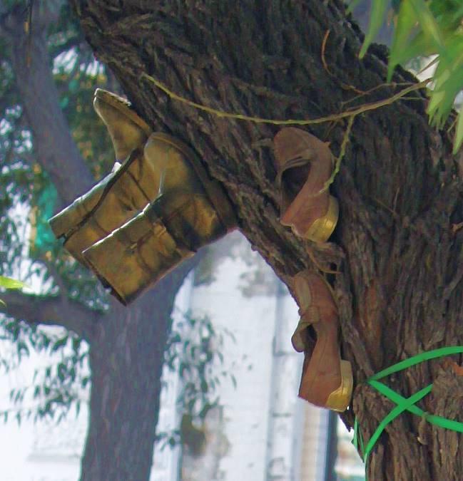 дерево1Вэб