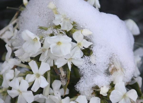 СнегВэб