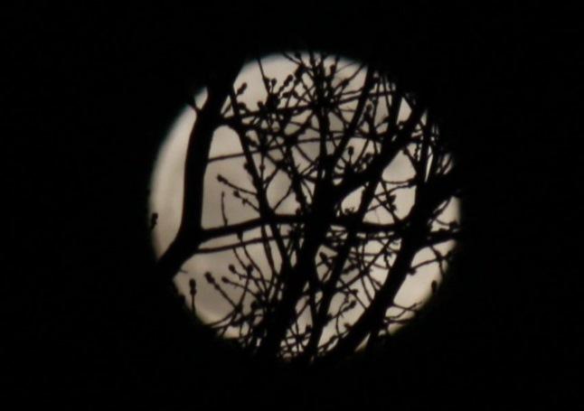 луна1Вэб