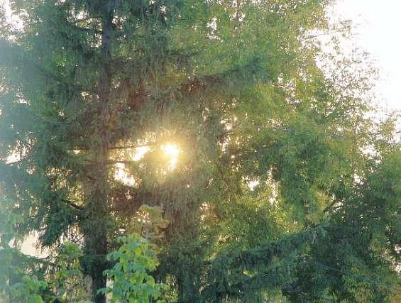 солнцеВэб